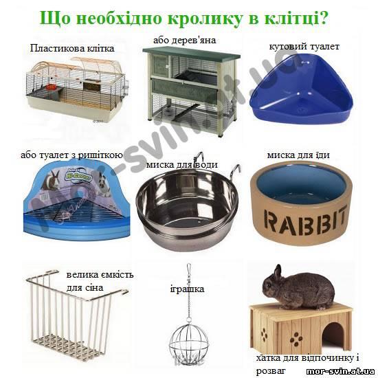 Чем кормить декоративного кролика в домашних условиях  291